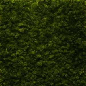 Islandmoos Waldgrün