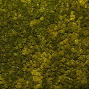 Islandmoos Naturgrün